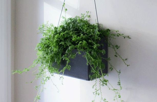 hangen-wall-planter-in-sunlight