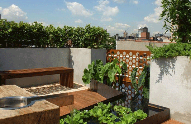 Five Urban Gardens Fresh Ideas: What's Been Growing, Glowing, Sowing, and Flowing